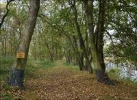 Park w Kościelcu nadal zamknięty